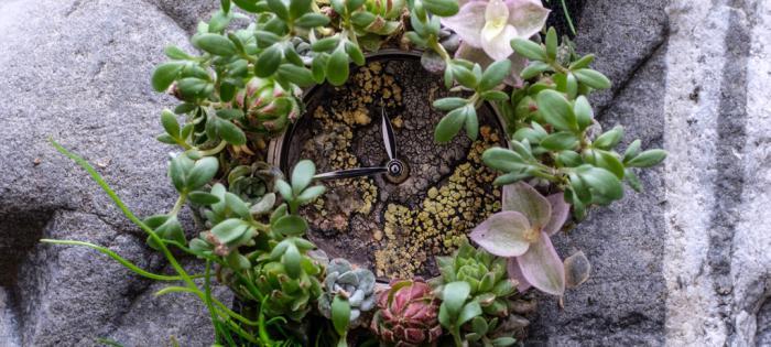 亨利慕时MOSER NATURE WATCH:一款旨在反应生态系统脆弱性的创新腕表