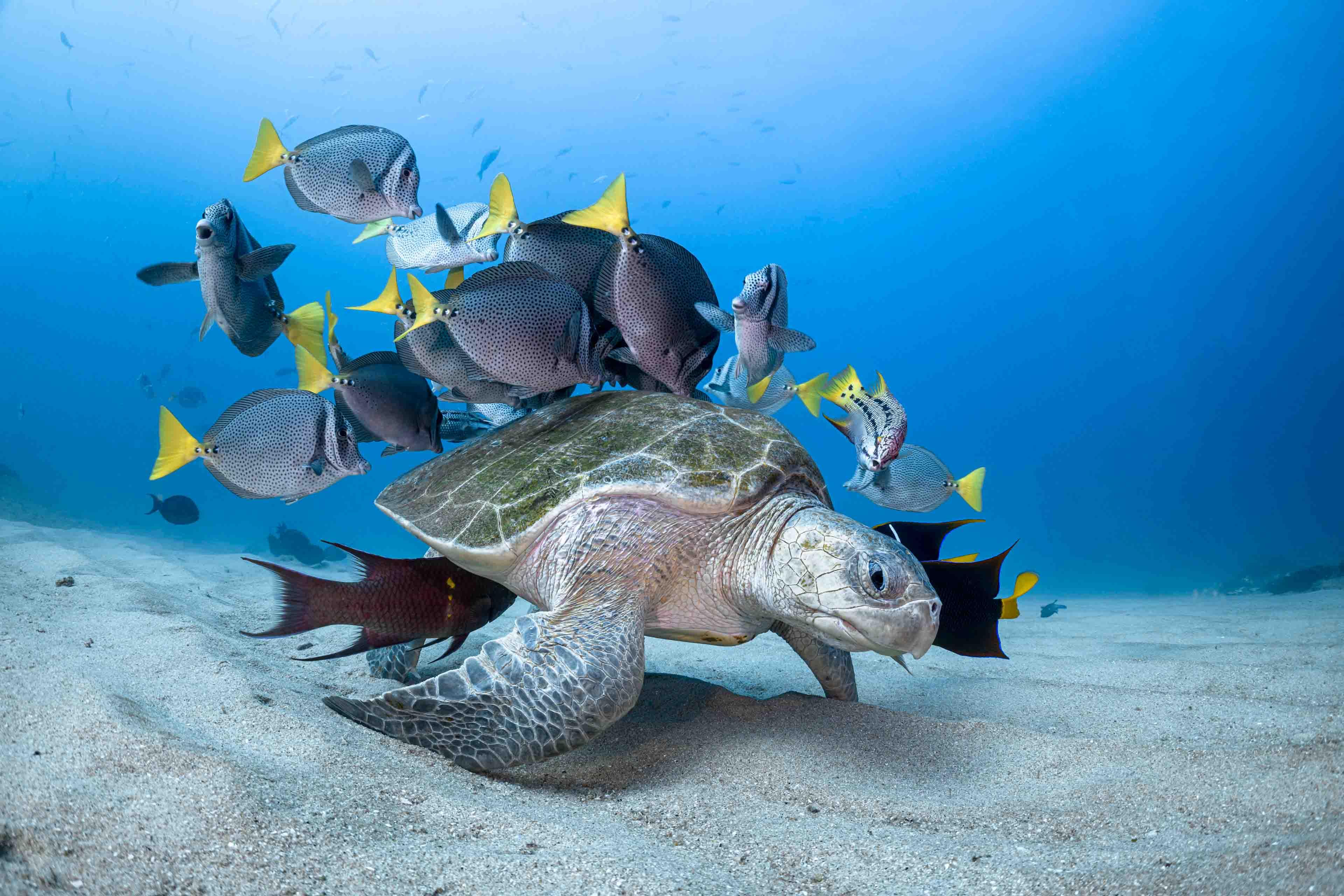 """宝珀Blancpain与""""海洋摄影奖""""建立合作伙伴关系, 深入推进 """"心系海洋"""""""